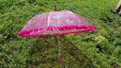 Deštník pro nevěstu,