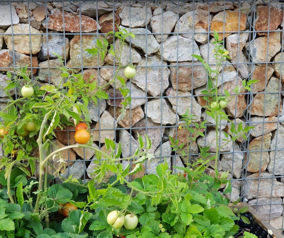 Naša záhrada - Obrázok č. 10