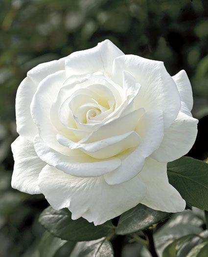 I love white ..... - Obrázek č. 26