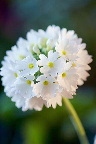 I love white ..... - Obrázek č. 37