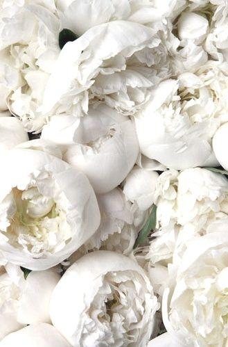I love white ..... - Obrázek č. 40