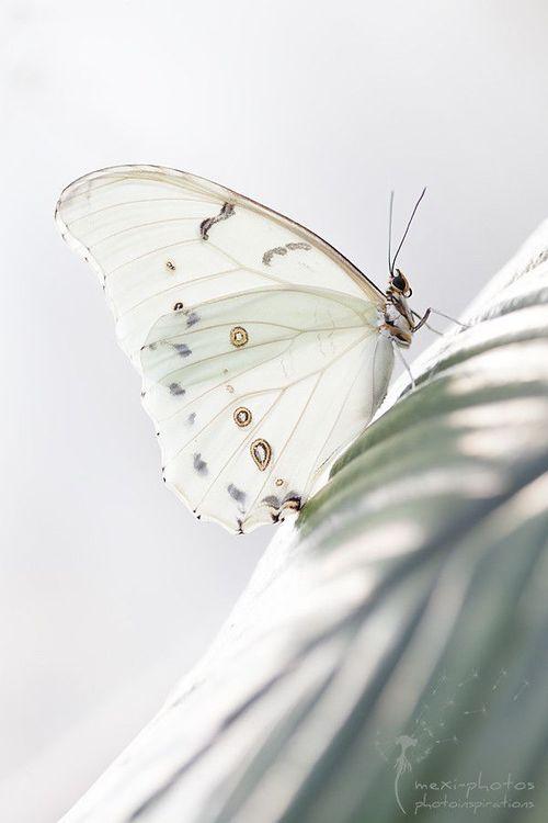 I love white ..... - Obrázek č. 48