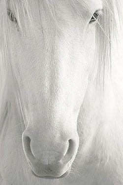 I love white ..... - Obrázek č. 54