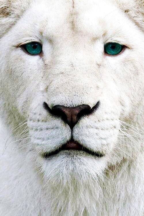I love white ..... - Obrázek č. 55