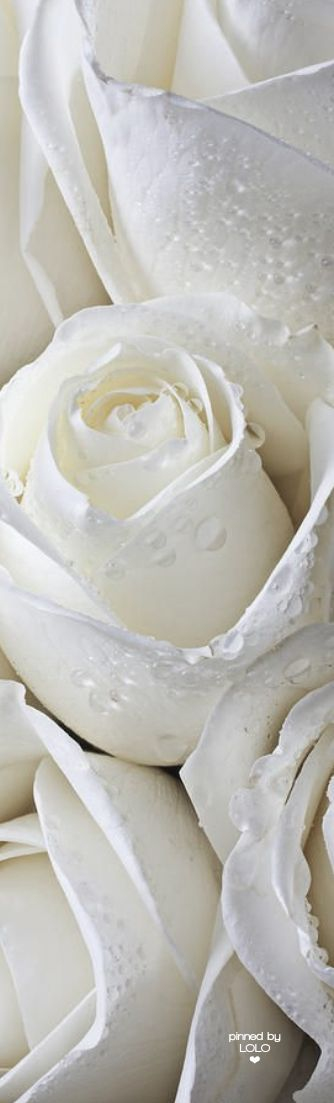 I love white ..... - Obrázek č. 64