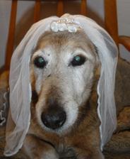 falešná nevěsta :-)