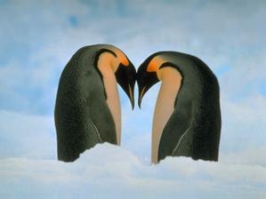 v našem případě tu ještě chybí malej tučňáček, jinak super