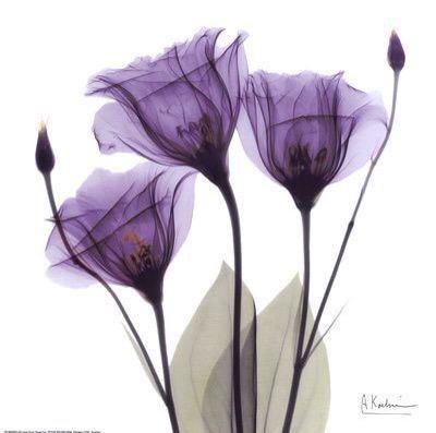 Color of the Year 2018 - Ultra Violet - Obrázok č. 33