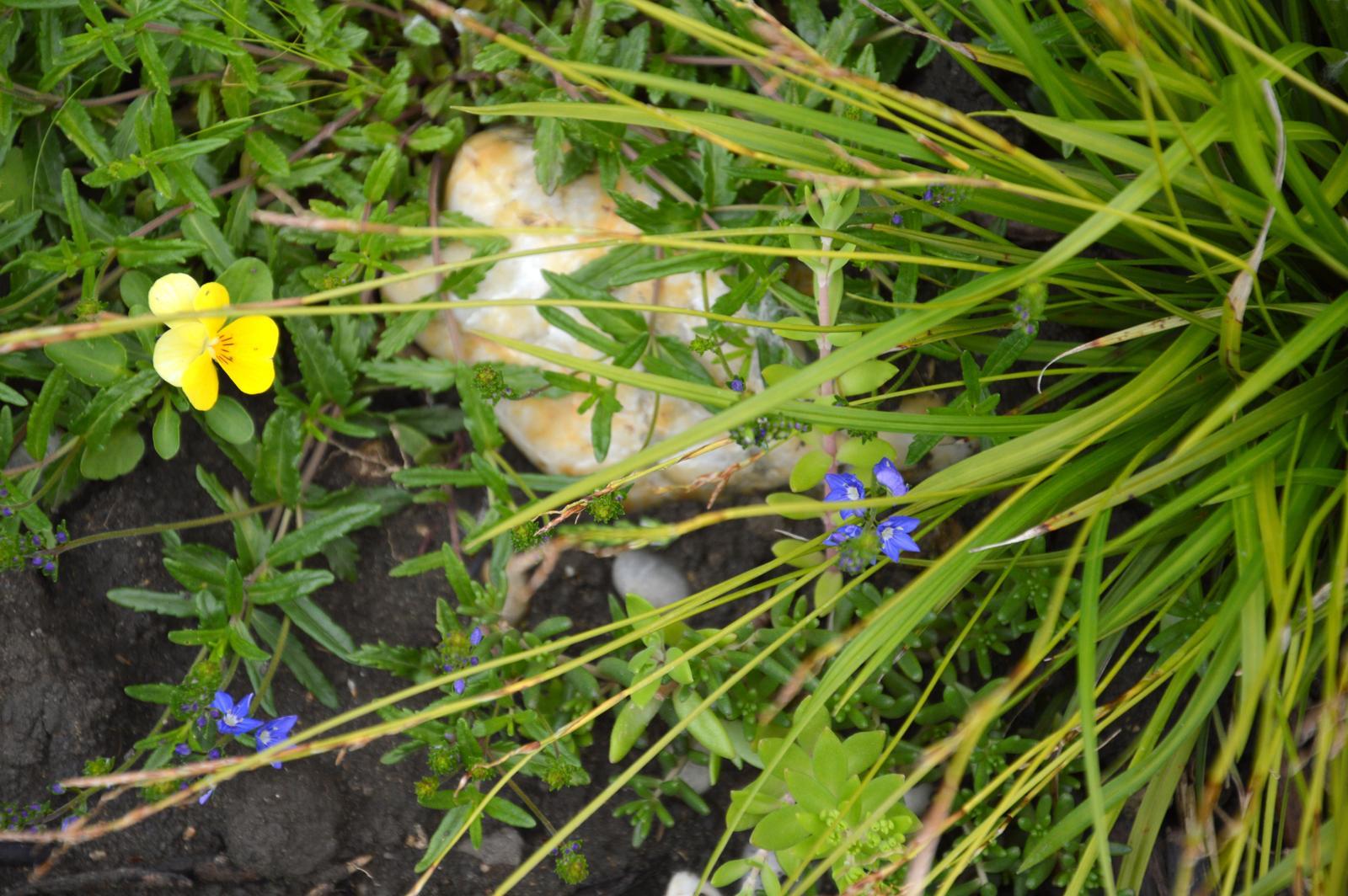 Niečo zo záhradky :-) - Obrázok č. 21