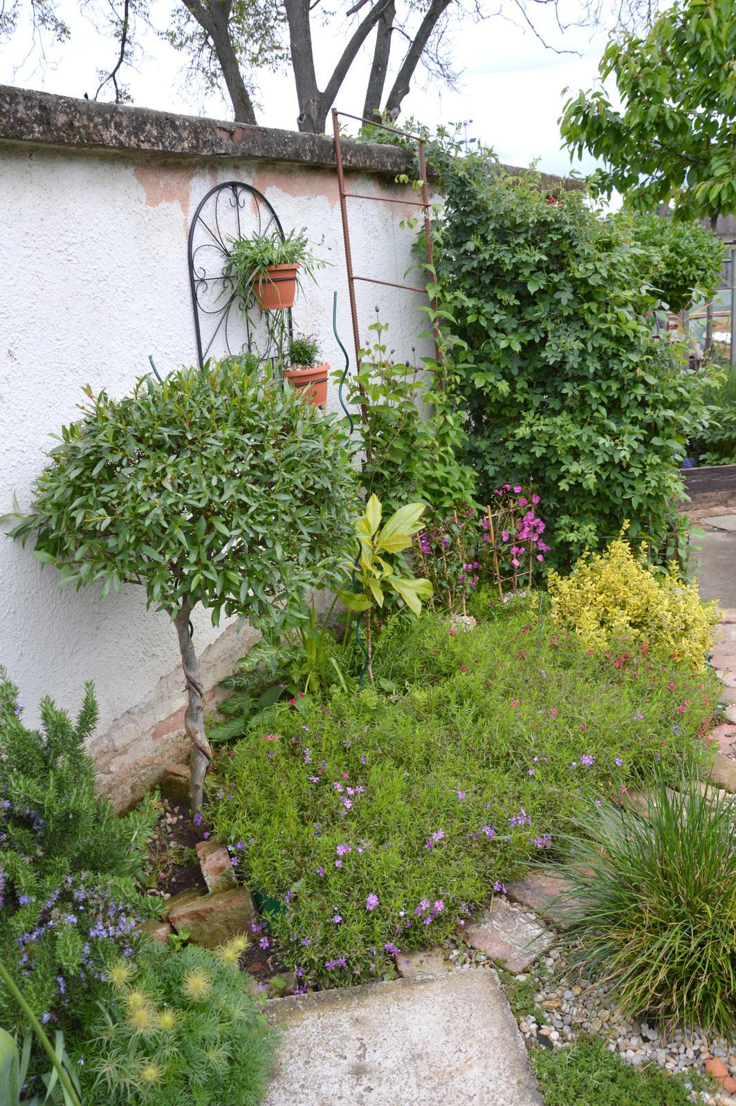 Niečo zo záhradky :-) - Obrázok č. 24