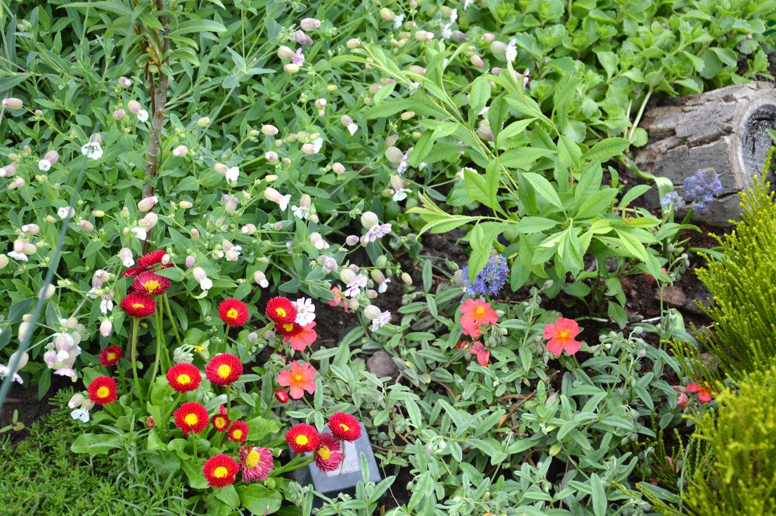 Niečo zo záhradky :-) - Obrázok č. 27