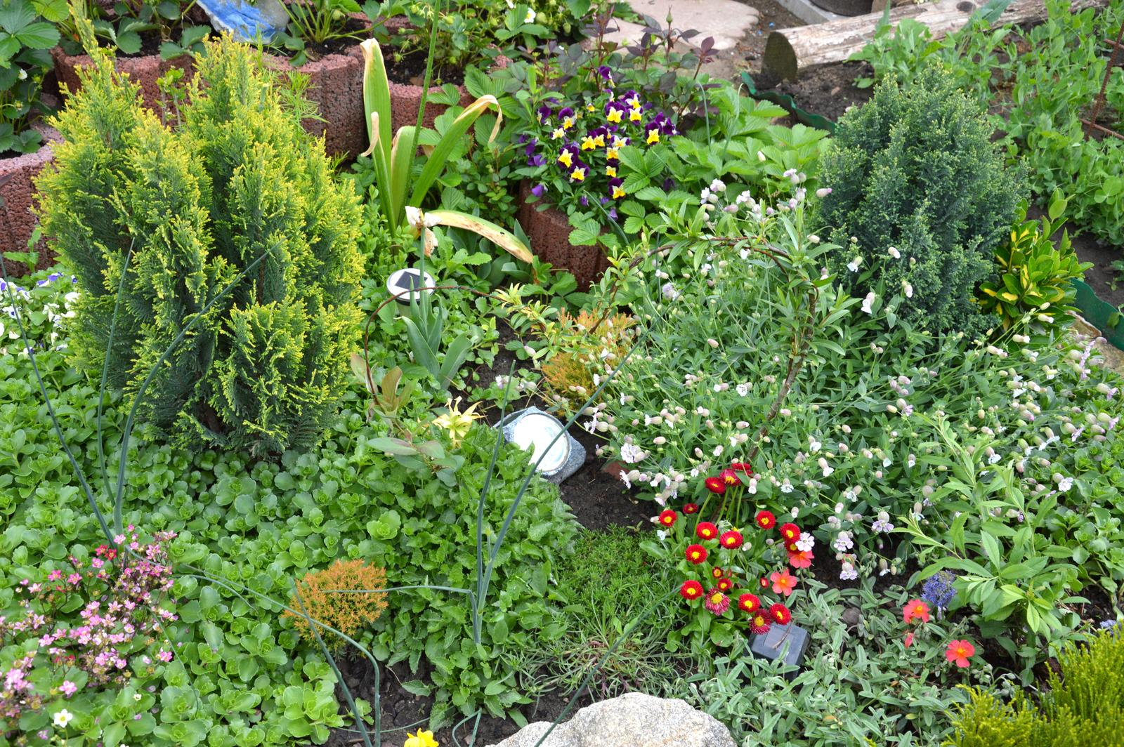 Niečo zo záhradky :-) - Obrázok č. 28