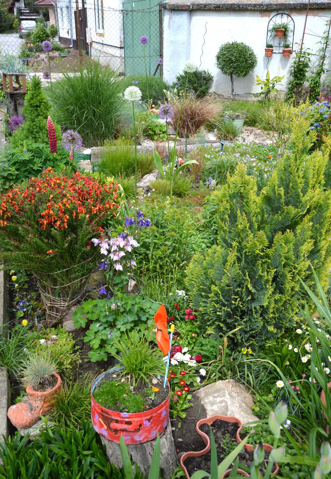 Niečo zo záhradky :-) - Obrázok č. 31