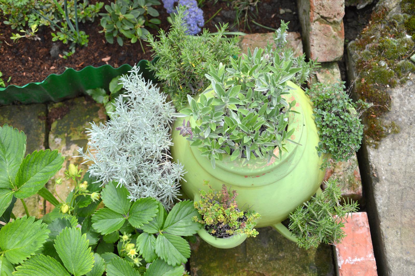 Niečo zo záhradky :-) - Obrázok č. 32