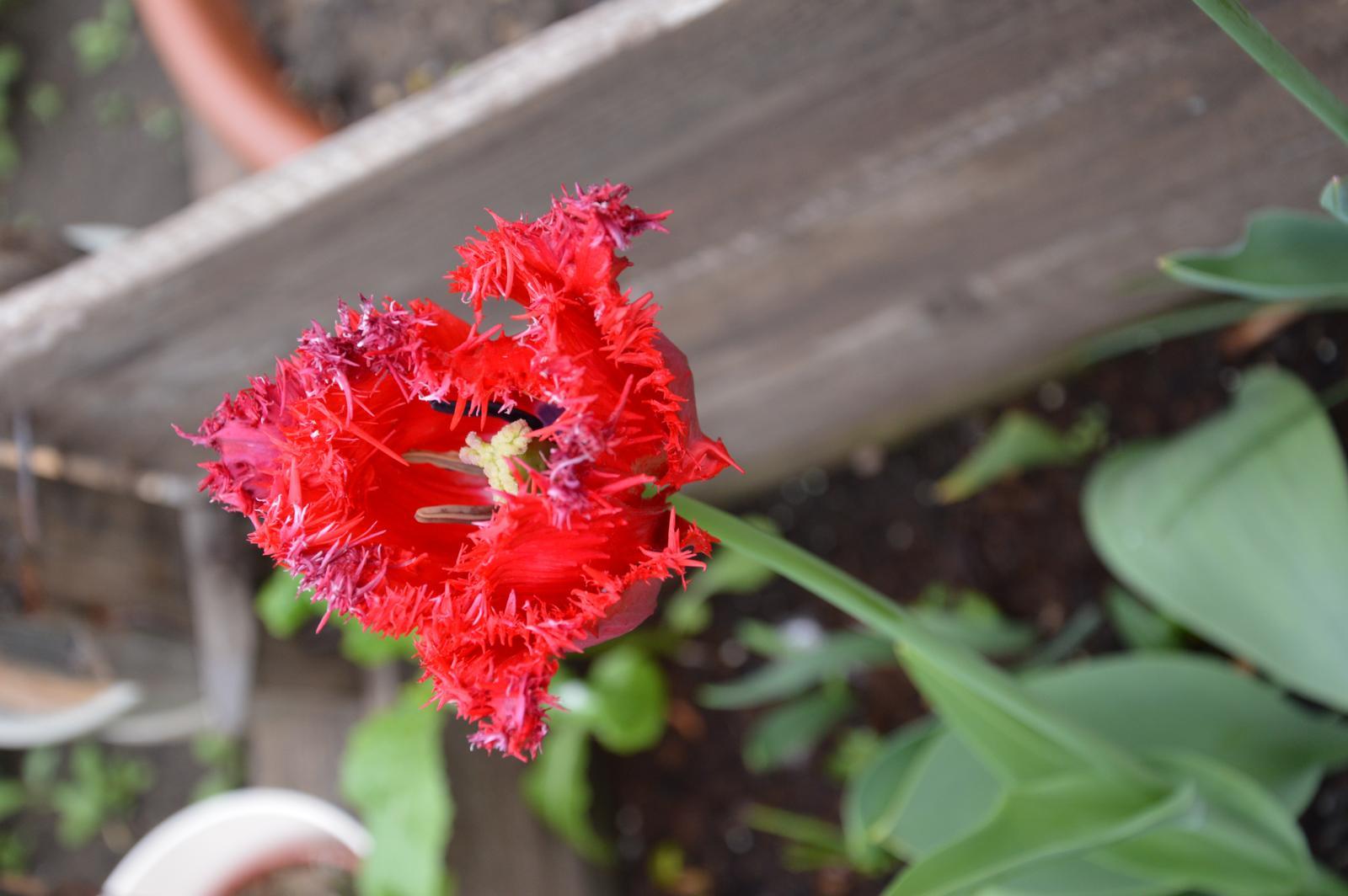Niečo zo záhradky :-) - Obrázok č. 34
