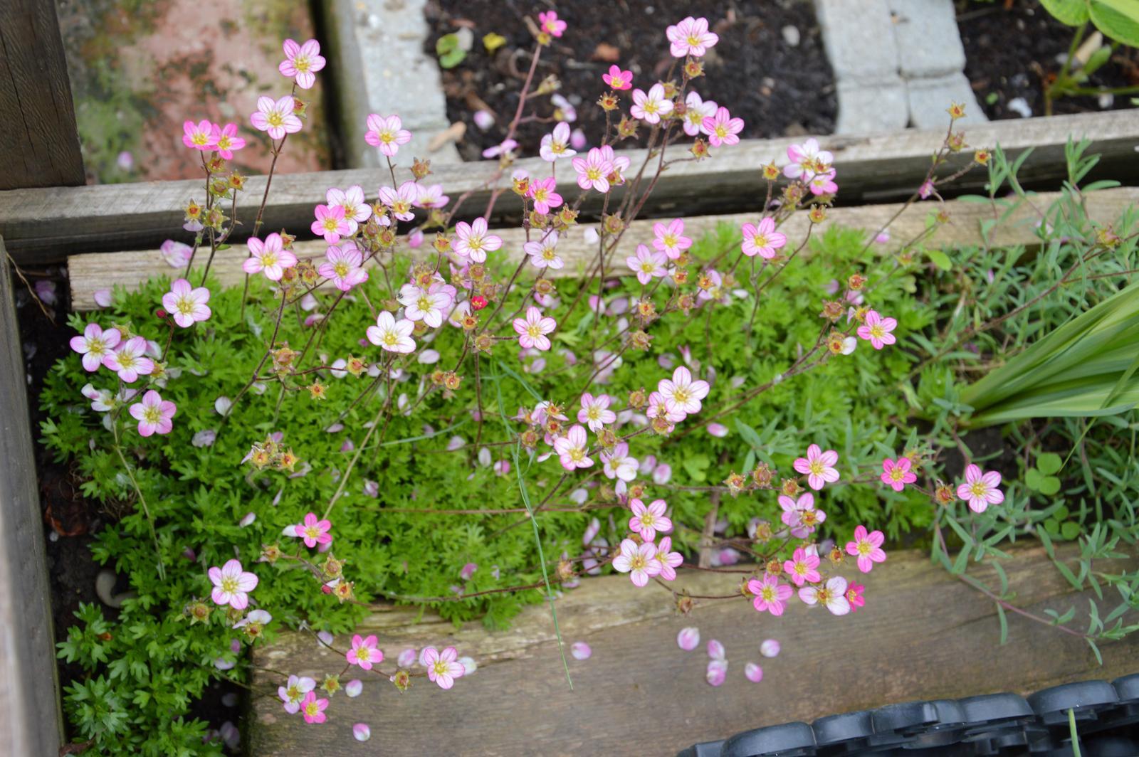 Niečo zo záhradky :-) - Obrázok č. 35