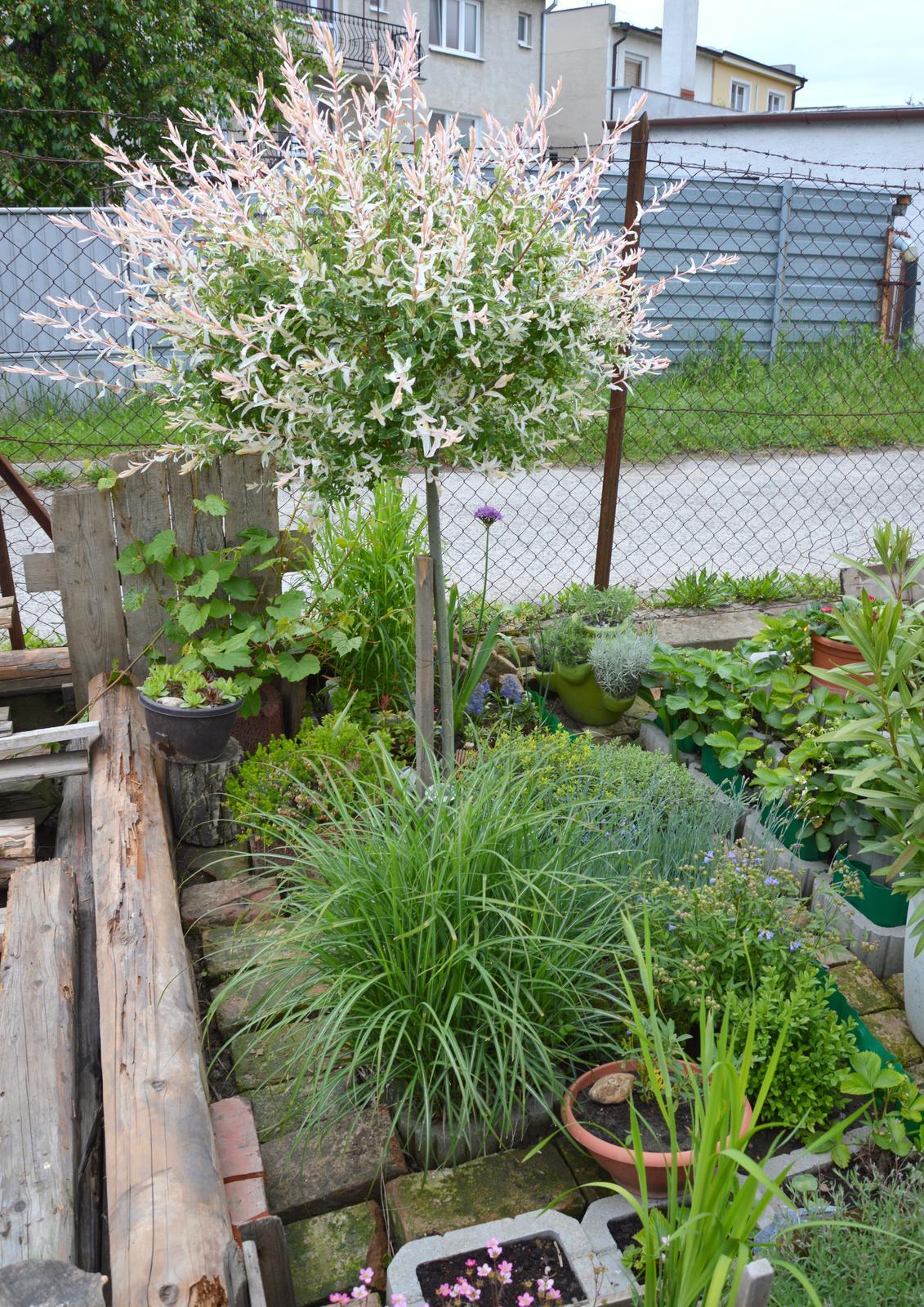 Niečo zo záhradky :-) - Obrázok č. 36