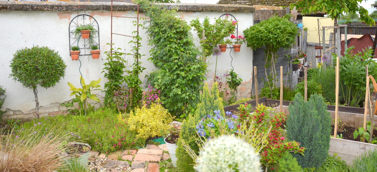 Niečo zo záhradky :-) - Obrázok č. 41