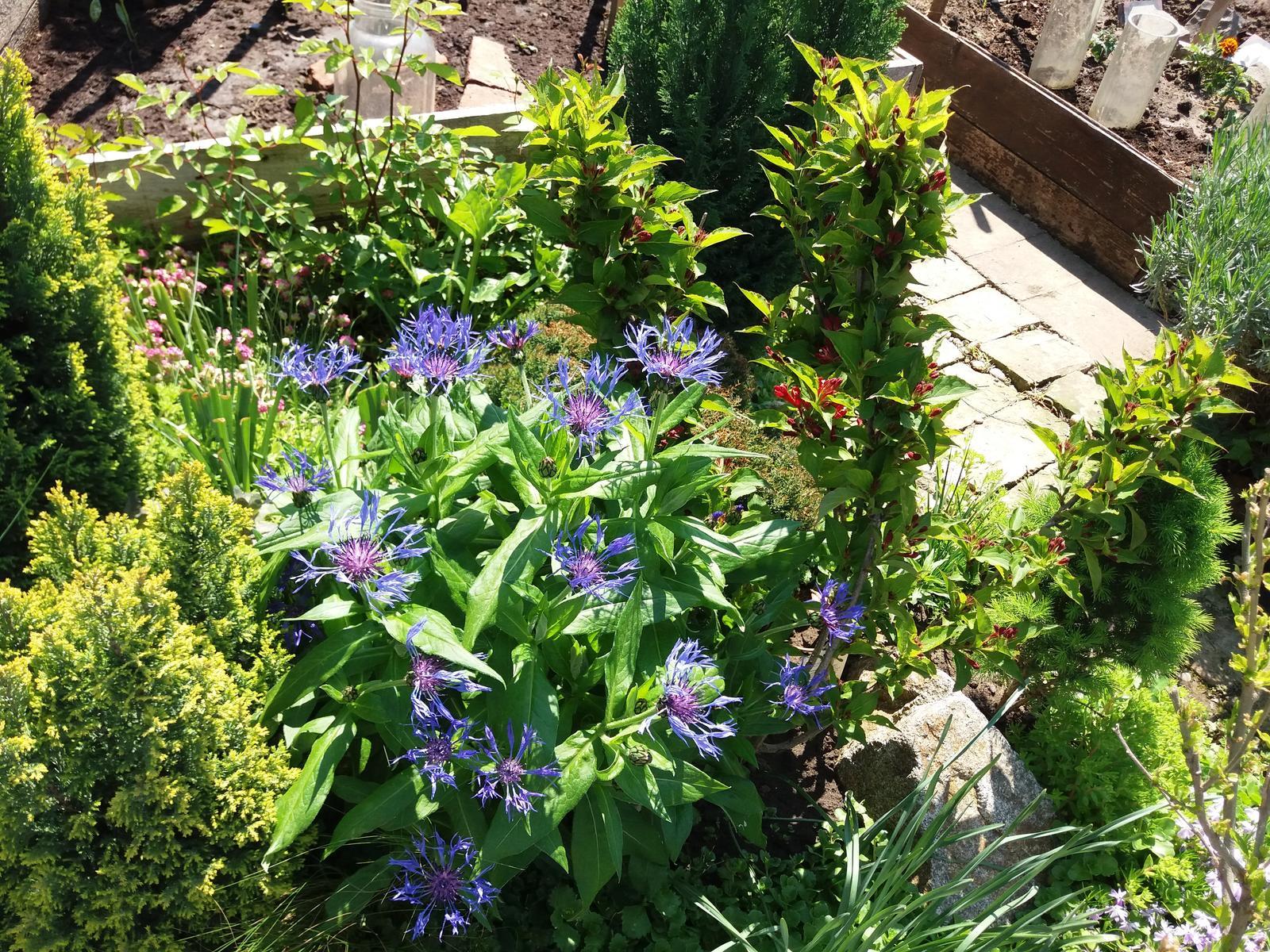 Niečo zo záhradky :-) - Obrázok č. 45