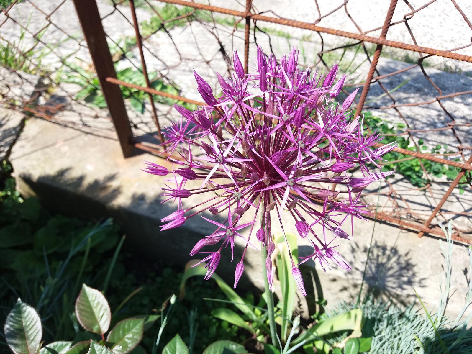 Niečo zo záhradky :-) - Obrázok č. 46
