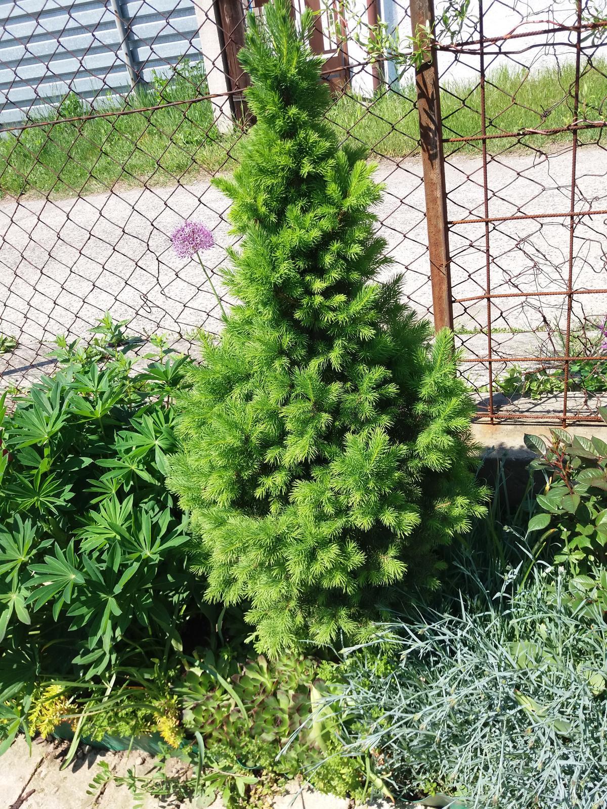 Niečo zo záhradky :-) - Obrázok č. 47