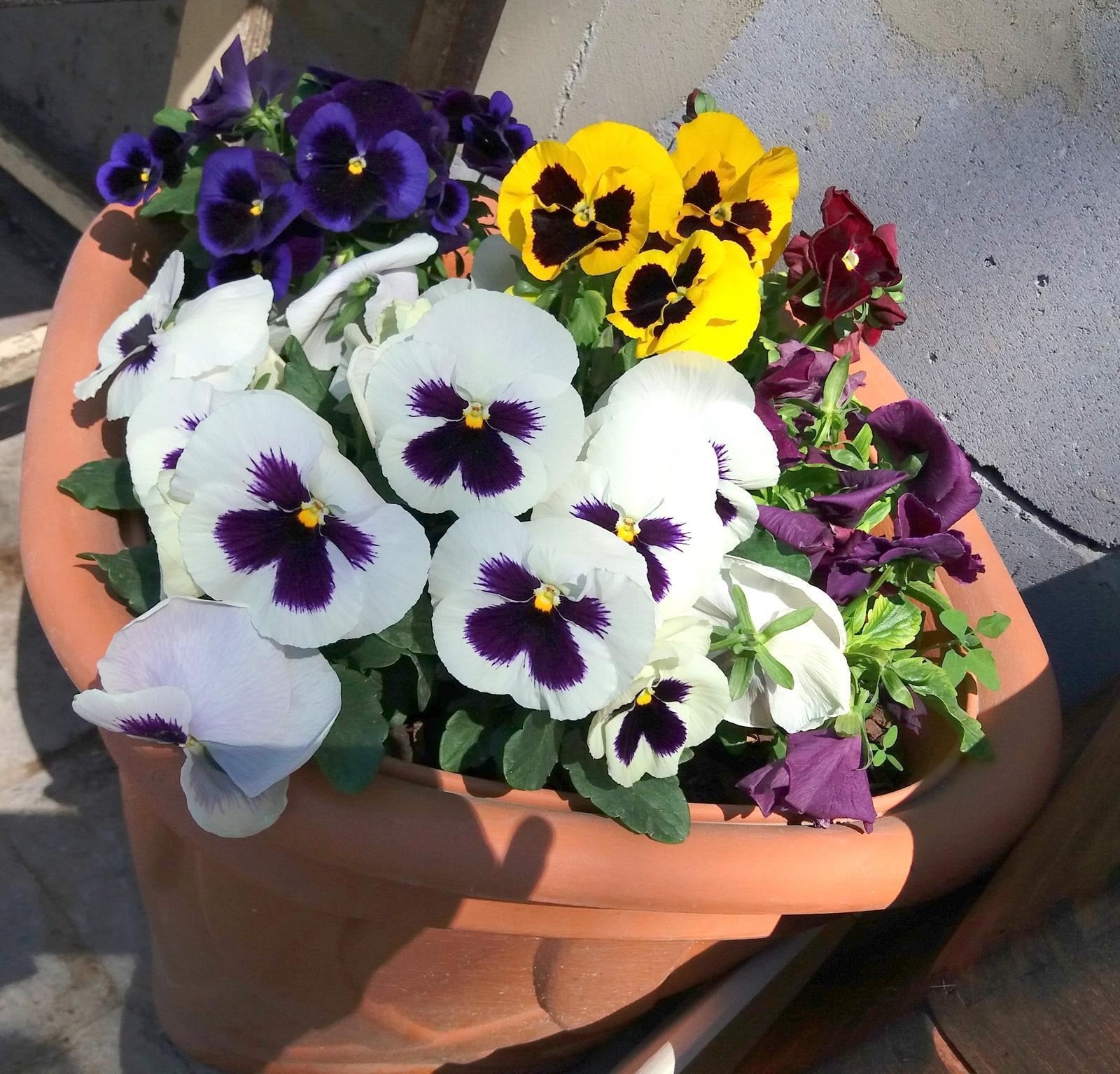 Niečo zo záhradky :-) - Obrázok č. 50