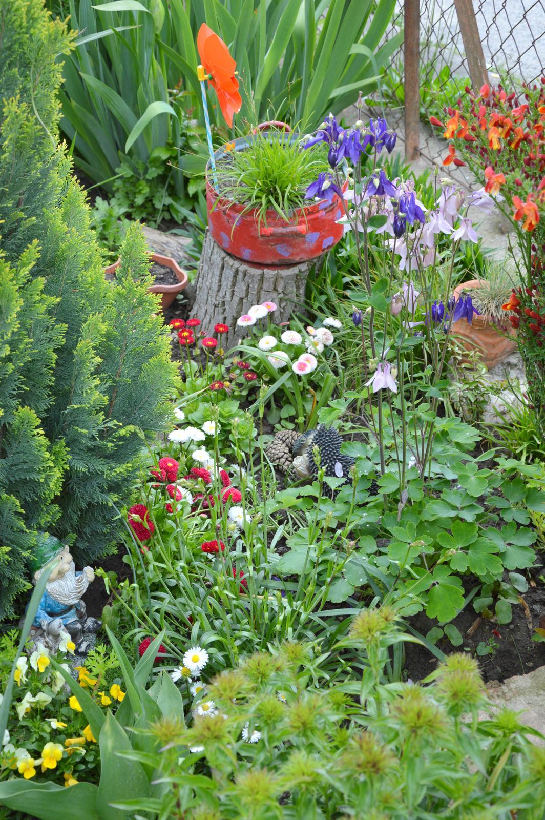 Niečo zo záhradky :-) - Obrázok č. 55