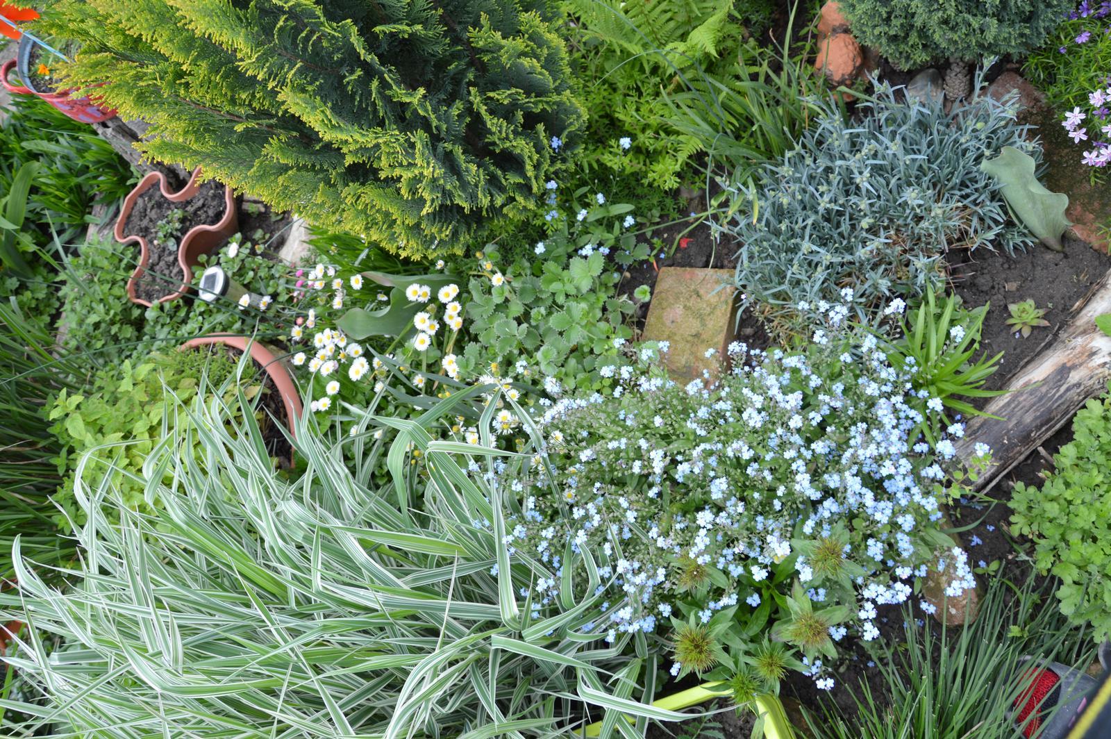 Niečo zo záhradky :-) - Obrázok č. 56