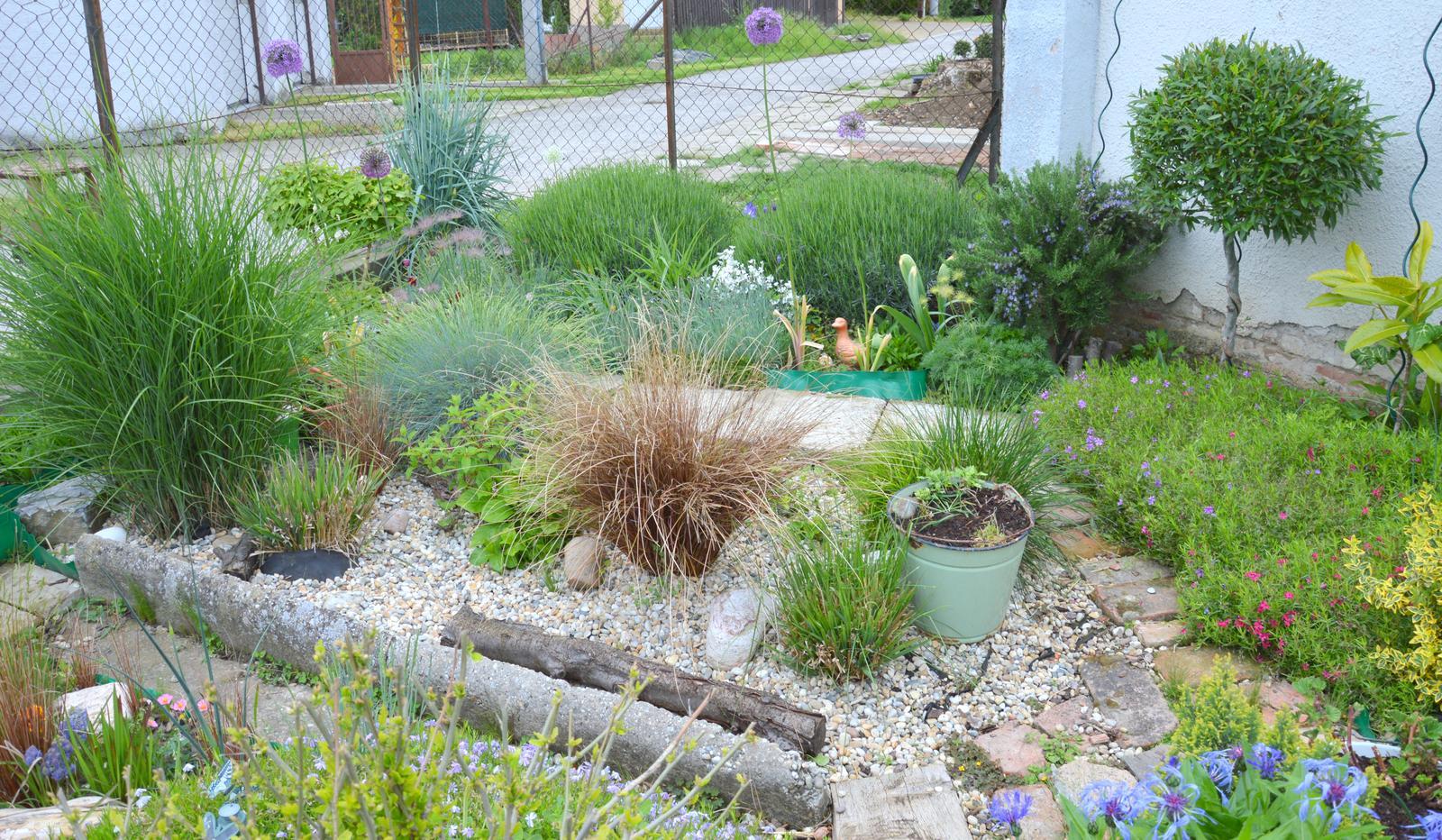 Niečo zo záhradky :-) - Obrázok č. 58