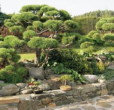 Tyto tři fotky jsou z nejkrásnější zahrady co jsem vyděl.