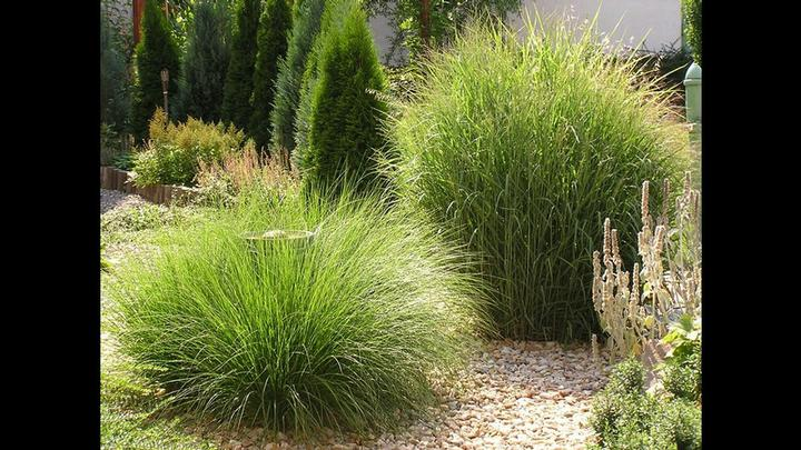 Zahrada - Obrázek č. 32