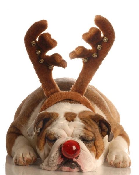 Vánoční čas - Obrázek č. 45