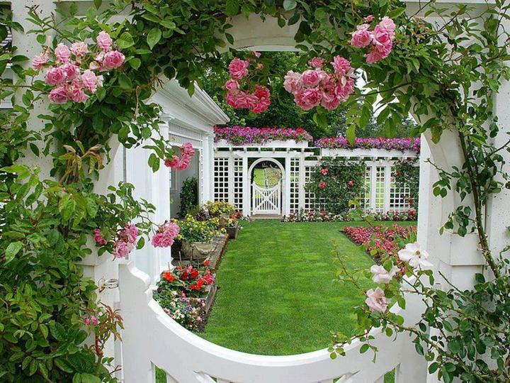 Zahrada - Obrázek č. 42