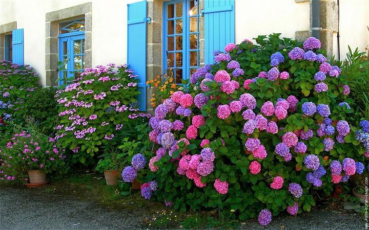 Zahrada - hrozně ráda stříhám a vše bych nejraději měla na kmínku, ale Hortenzii to neudělám