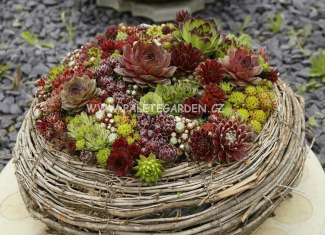 Zahrada - moje láska....netřesky