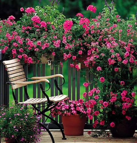 Zahrada - Obrázek č. 79