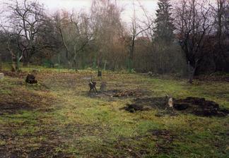 Původní fotku zahrady snad ani nemám. Na téhle je trošku vidět jak jsme zápasili s pařezy. Celkem jich tu bylo 13.