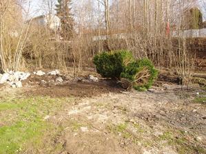 Na břeh potoka navážíme suť a zvyšujeme terén. Kamarádi vyhodili buxus a nám se bude hodit. Zasadíme a ostříháme a ještě nadělá parádu, uvidíte.
