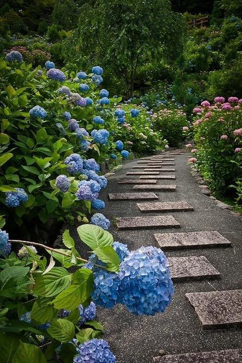 Zahrada, v hlavní roli kámen/ aneb jsem šutrofilka - Obrázek č. 38