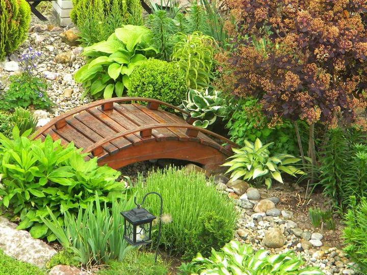 Zahrada - toto je paráda (bohyšky, ruj, levandule, lilie, buxus, kosatec a spousta kamínků)
