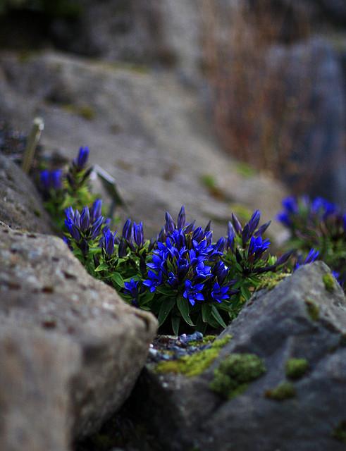 Zahrada, v hlavní roli kámen/ aneb jsem šutrofilka - Obrázek č. 57