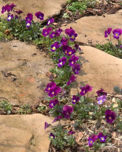 Zahrada, v hlavní roli kámen/ aneb jsem šutrofilka - Obrázek č. 58