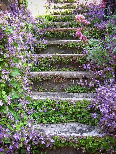 Zahrada, v hlavní roli kámen/ aneb jsem šutrofilka - Obrázek č. 62