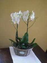 Tak a koupila jsem si vysněné orchidejky a hnedle 5 ks. Tyto přijdou sesadit do něčeho modernějšího a do obývacího pokoje.