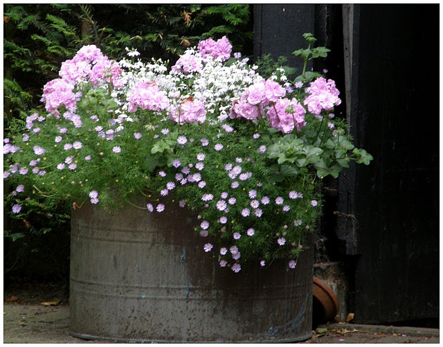 Krása v zahradách - To mi připomnělo, že letos nemám všelichu. To je ta kytička s drobnými kvítky.