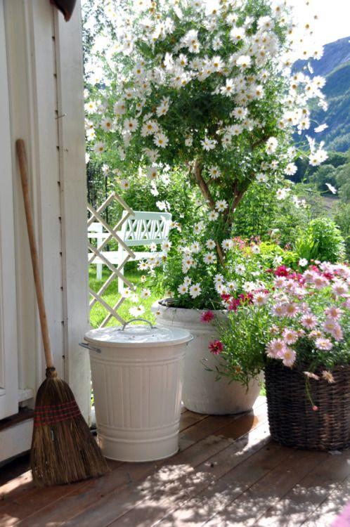Krása v zahradách - Ach.... ta bílá kopretina.