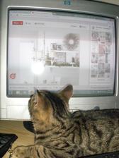 Kocour vyloženě počítač miluje. Tady náhodou leží, jinak škodí jak může.