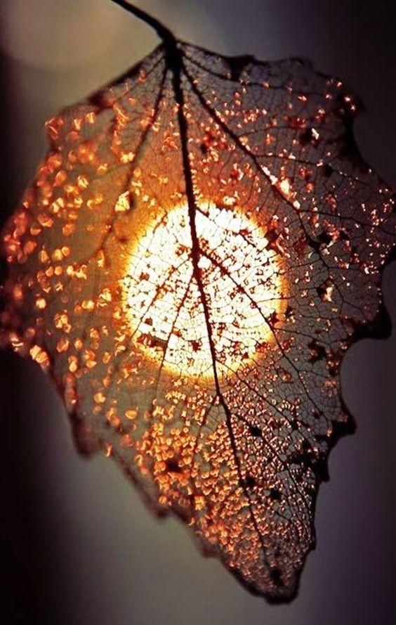 Podzimní čas - Obrázek č. 220