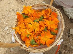 házení živými květy (rýži se bráním)