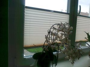 Konečně namontované plisé v oknech :-) Monáž trvala asi 3 minuty :-)